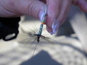 Falling for New Brunswick's Miramichi, hook, line, andsinker