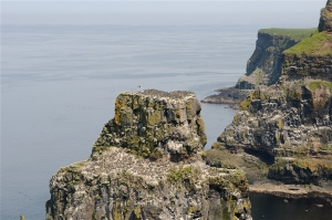 Birds on the stacks at Rathlin Island. ©Hilary Nangle