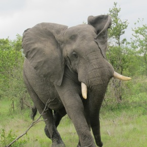 Postcard from South Africa: Safariscenes