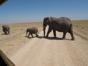 Elephants viewed from the safari vehicle in Amboseli National ParkIMG_8755